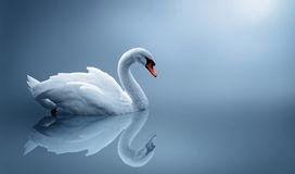swan-174743891